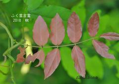 ふく霊言霊2018秋_cropped_compressed_1.jpeg